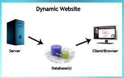 Dynamic Website Developer